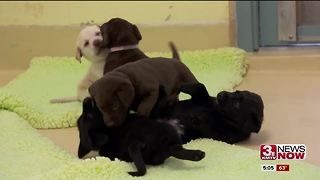 Better Business Bureau warns of online puppy scams - Video