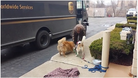 UPS Driver Stops By To Give Treats To Waiting Dogs