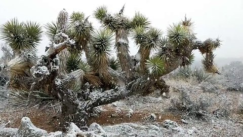Snow Falls in Nevada's Red Rock Canyon