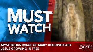 Mysterious Image Of Mary Holding Baby Jesus Growing In Tree - Video