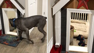 DEVOTED DOG OWNER BUILDS AMAZING UNDERSTAIRS HOME FOR HIS TWO POOCHES COMPLETE WITH LIGHTS AND RUNNING WATER