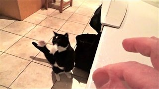 Cat Shows Off His Goalkeeping Skills