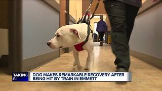 Dog makes remarkable recovery after being hit by train in Michigan