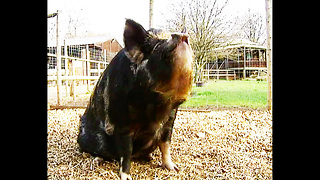 Big Fat Pets - Video