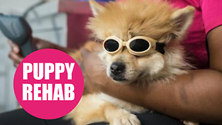 Pomeranian Penny takes to underwater treadmill to make miracle recovery - Video