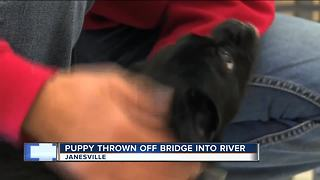 Puppy thrown from bridge into Rock River, humane society seeking owners - Video