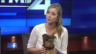 Ask the expert: holiday safety tips for pets