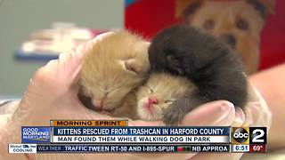 Kittens rescued by passerby in Harford County - Video