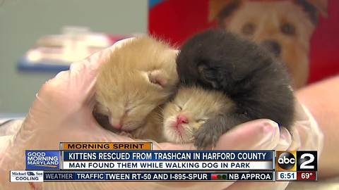 Kittens rescued by passerby in Harford County