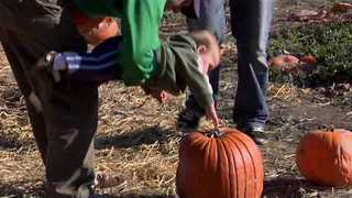 Fathers Take Their Adorable Child to a Pumpkin Farm - Video