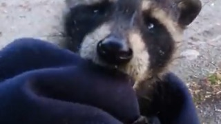 Abandoned baby raccoon not happy about being rescued - Video