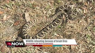 Wildlife relocating because of brush fires - Video