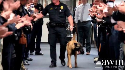 K9 Who Sacrificed His Life To Protect And To Serve, Gets Unforgettable Sendoff