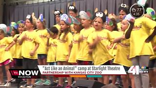 'Act Like an Animal' camp at Starlight Theatre - Video
