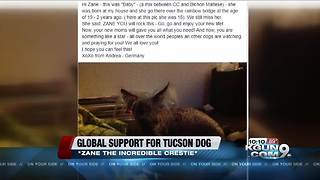 Tucson dog gets worldwide attention on road to recovery