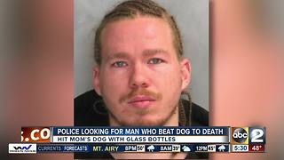 Man accused of beating his dog to death with glass bottle wanted - Video