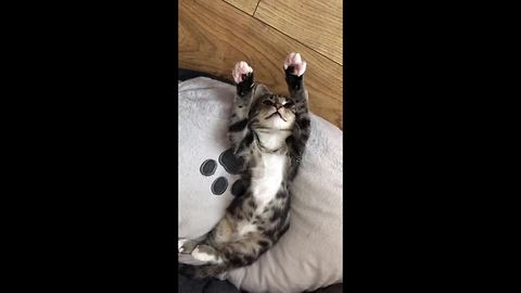 Mad with power: Phoebe the kitten hypnotised by own claws