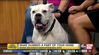 Rescues in Action Sept 21 | Django needs forever home