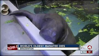 Snooty the Manatee Dies at 69 - Video