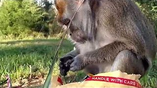Monkey Gets Care Package in Post With Lots of Tasty Treats - Video