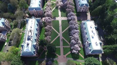 Drone footage captures cherry blossoms on college campus