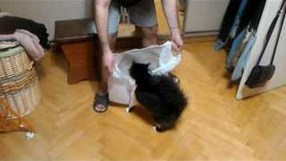 For Some Reason This Cat Loves Plastic Bags