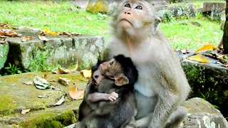 Bigger Baby Hug Bay Monkey Too Tight Cry For Free - Video