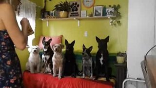 The six most well trained dogs in the world!