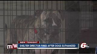 Director of no-kill Richmond animal shelter fired after dogs euthanized - Video