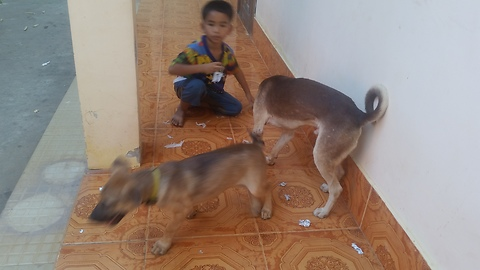 Two dog are play with together