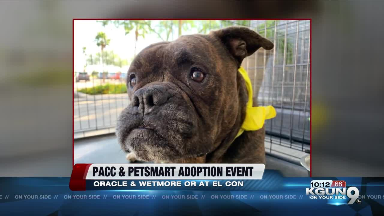 PACC waives adoption fees for PetSmart national adoption weekend