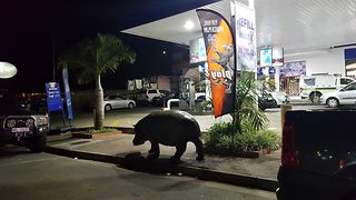 Diesel or petrol? Bizarre footage from South Africa captures hippo making a pit stop at local gas station - Video