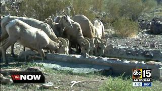 AZ Game and Fish transporting water to wildlife animals during dry weather - Video