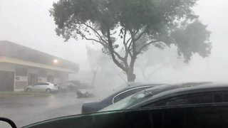 Gusty Storm Blows Down Tree Limbs in Austin - Video