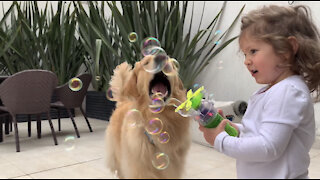 Little girl preciously blows bubbles for doggy to catch