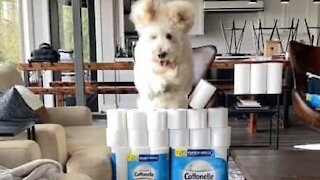 Dog jumps over toilet paper like a pro