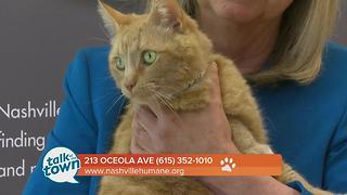 Nashville Humane Association Pet of the Week 6-16-17 - Video