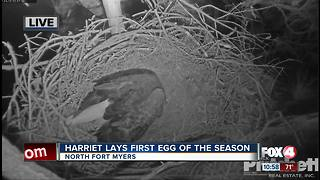 Harriet lays first egg of season