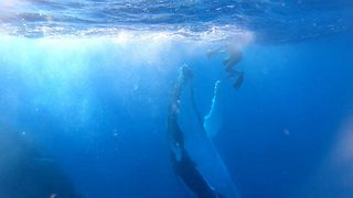 Diver Receives A High Five From A Whale