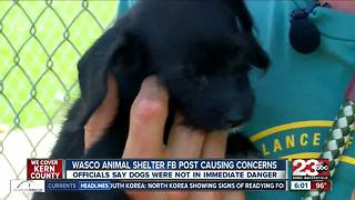 Dogs rescued, adopted after Facebook post causes concern - Video