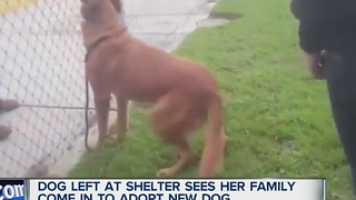 Dog left at shelter by family - Video