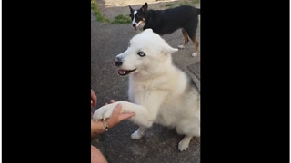 Howling dog throws tempter tantrum for BBQ
