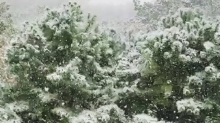 Tennessee Mountains Wake Up to Snow - Video