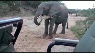 Elephant throws sand and water at tourists on safari