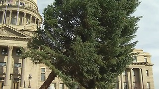 IDAHO'S CHRISTMAS TREE - Video