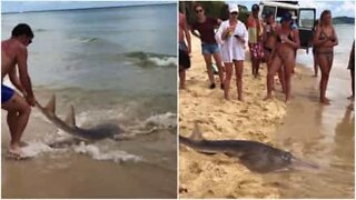 Man catches shark with his bare hands