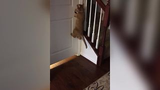 Funny Cat Knows How To Open The Door - Video