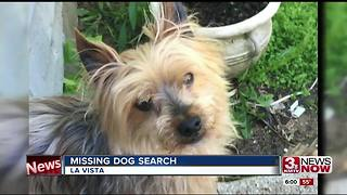 Found dog never returned to La Vista family