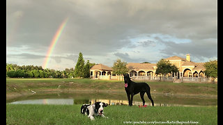 Great Dane & puppy play under majestic rainbow - Video