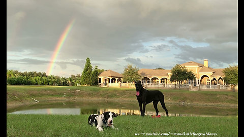 Great Dane & puppy play under majestic rainbow